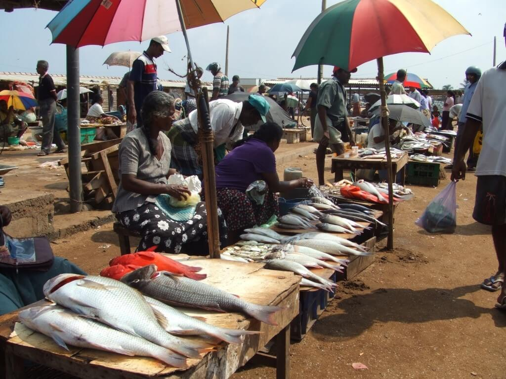 Fish Market in Sri Lanka © Renaissance Sri Lanka