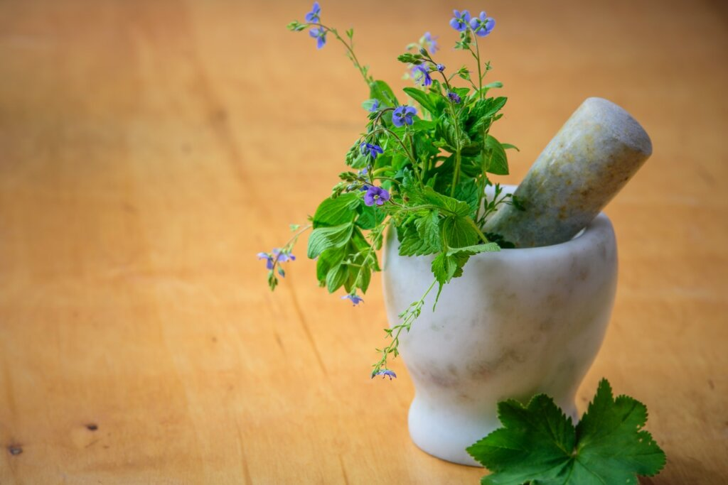 In many cultures, medicines come from plants. © PhotoMIX Company Unsplash