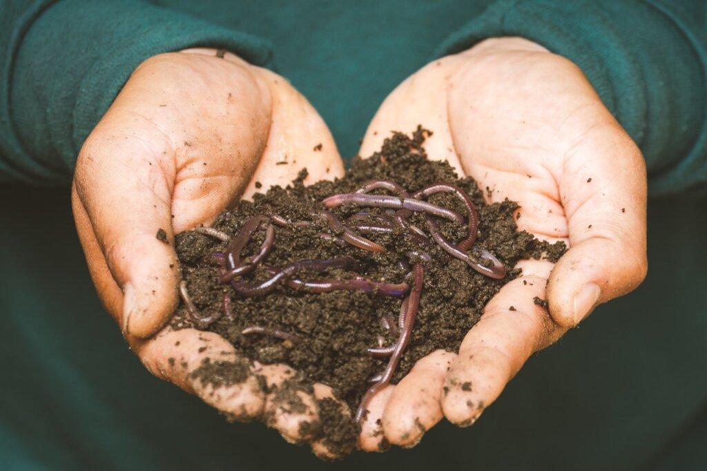 Organic Fertilizer - Pexels Sippakorn Yamkasikorn